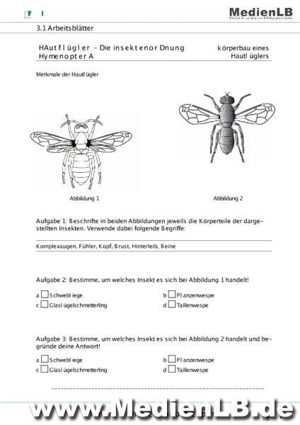 Arbeitsblatt Bienen Grundschule : Mediathek