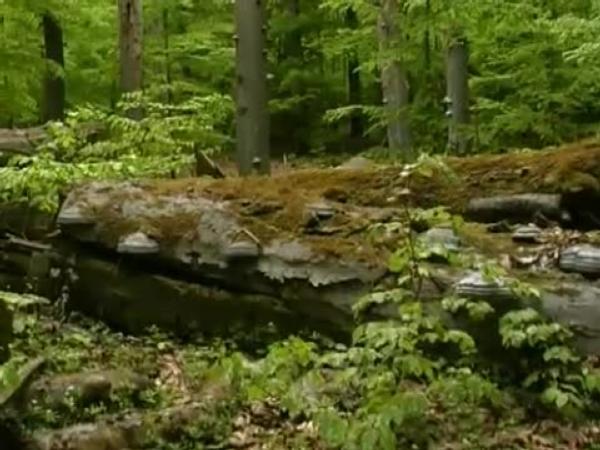 gemäßigte zone vegetation