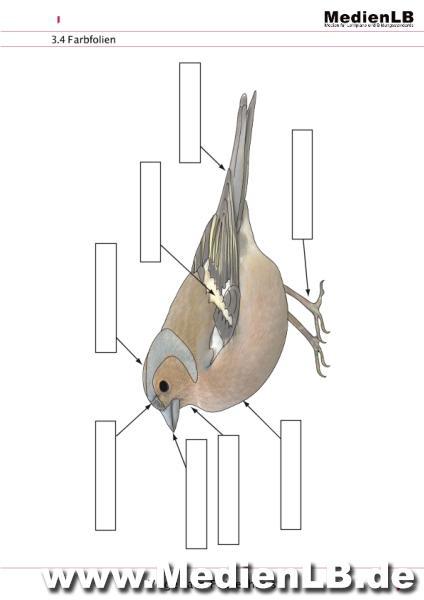Kostenlose Arbeitsblätter Vögel Im Winter : Mediathek